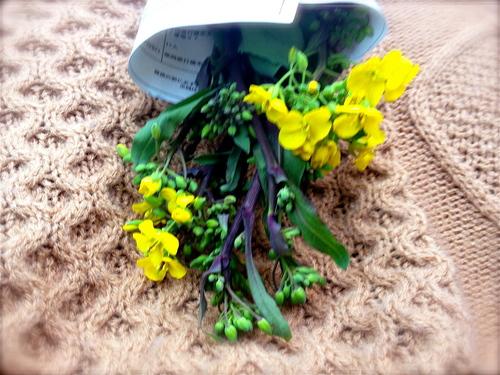 2012/3/7菜の花