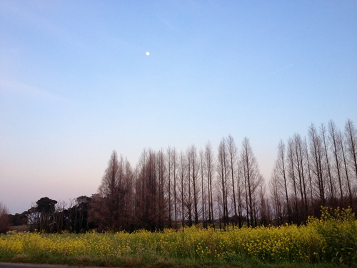 2012/4/3メタセの杜裏