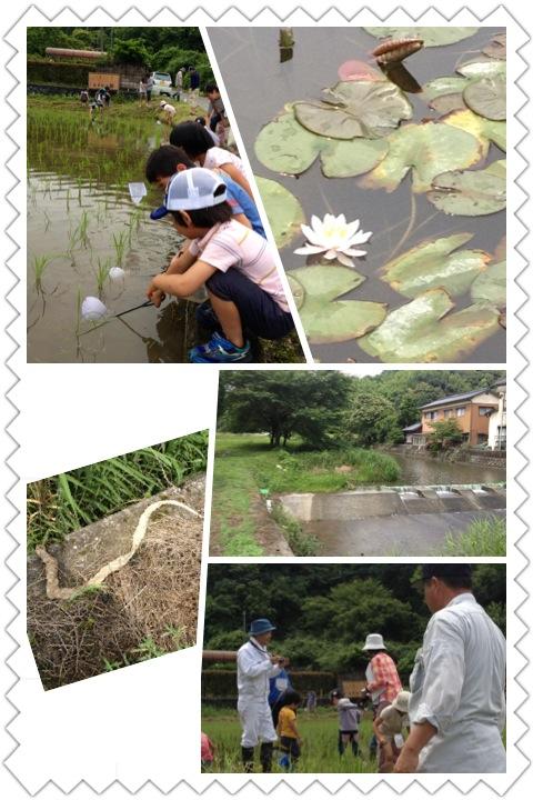 くまわりファーム2012田植え祭り