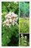 2012/7/4スローラボオフィスハーブの花達