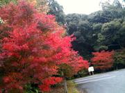 2010年11月本庄池の紅葉